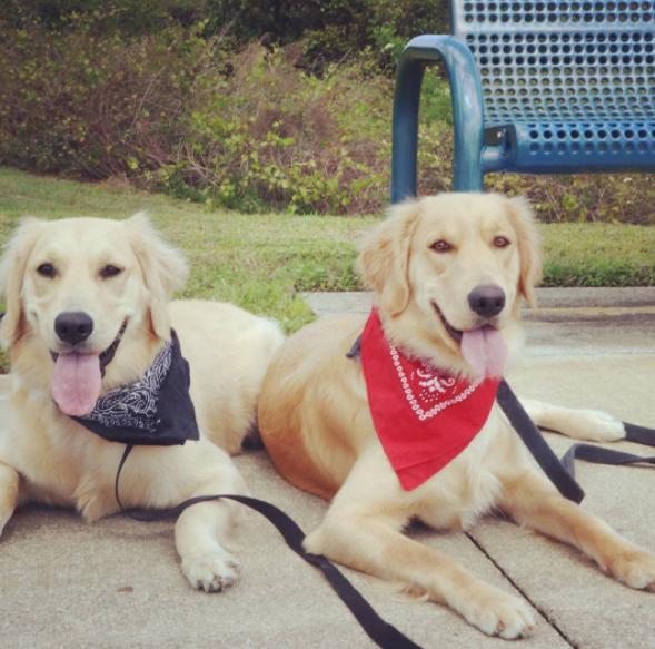 Dog Training South Florida Boarding